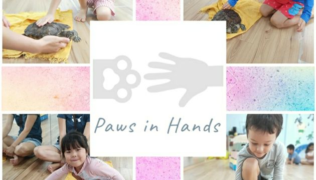 Paws In Hands: Terrapin Interaction